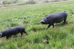 Inagh Free Range Pork