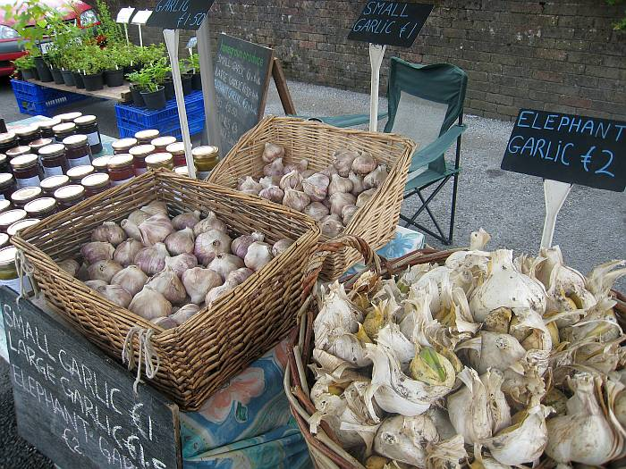 IMG_5214_ChrisGarlic