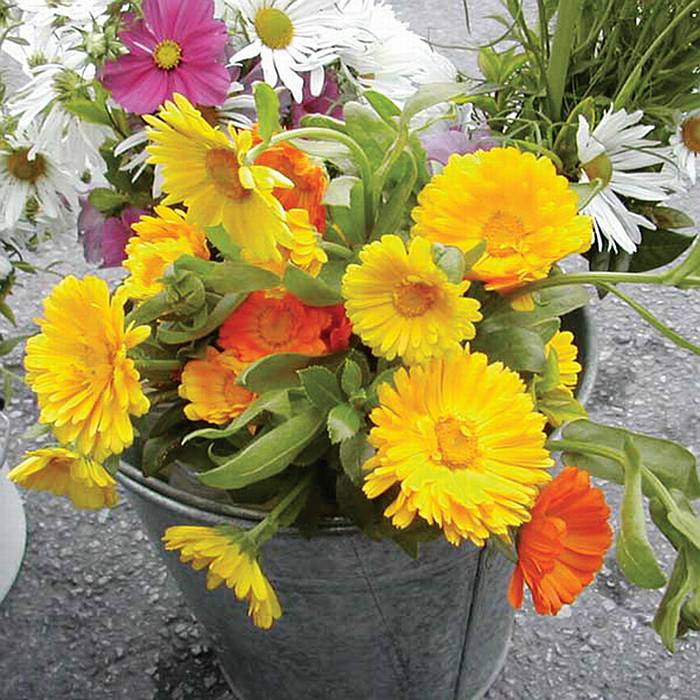 Marigolds_1_small